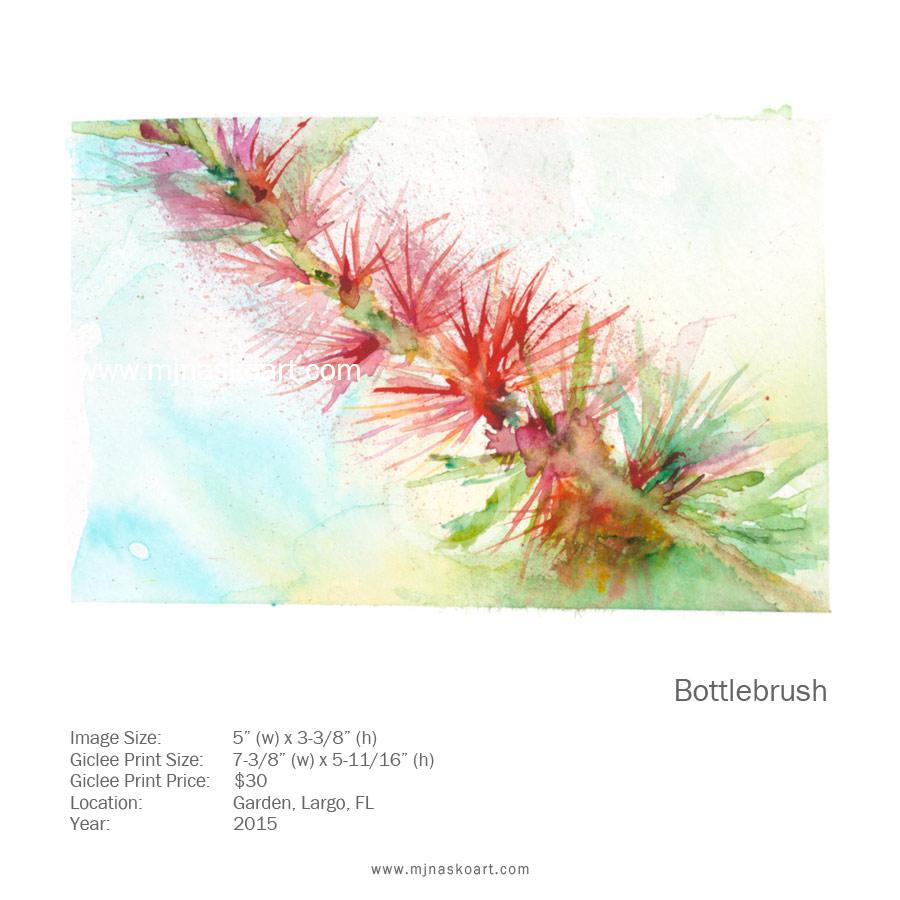 Bottlebrush